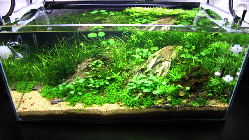 60l kitchen tank by andy hart uk aquatic plant society. Black Bedroom Furniture Sets. Home Design Ideas