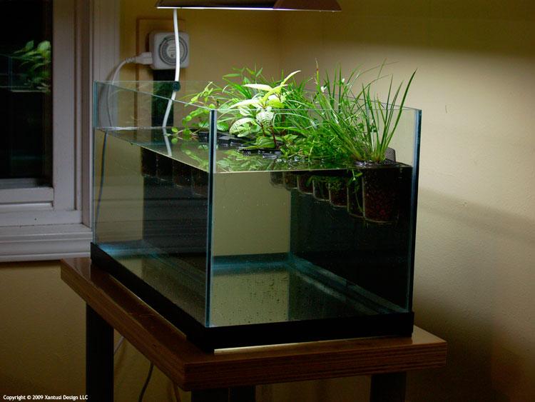 Растения в аквариуме сажают в 437