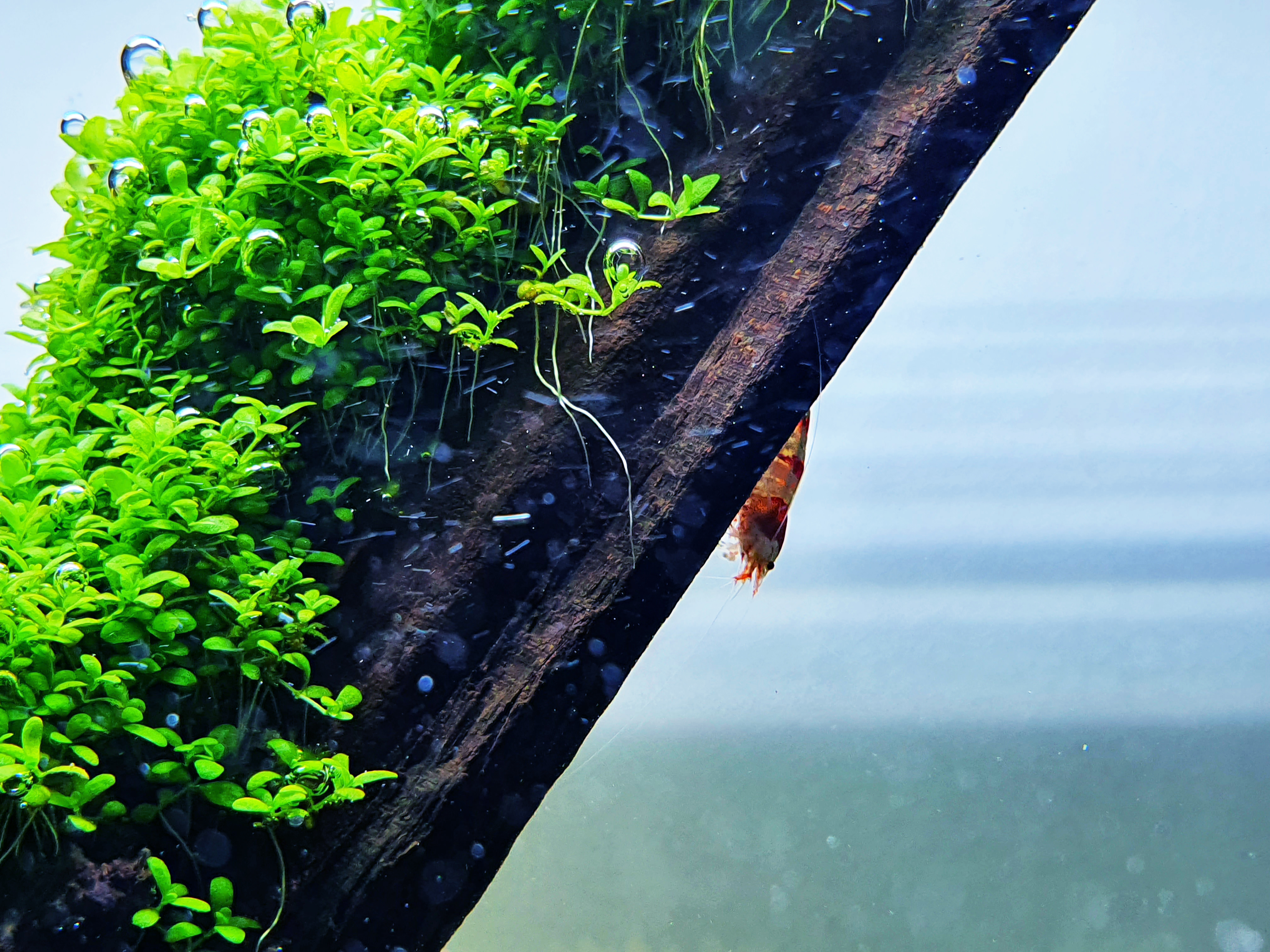 2020-07-15 - Shrimp 05.jpg