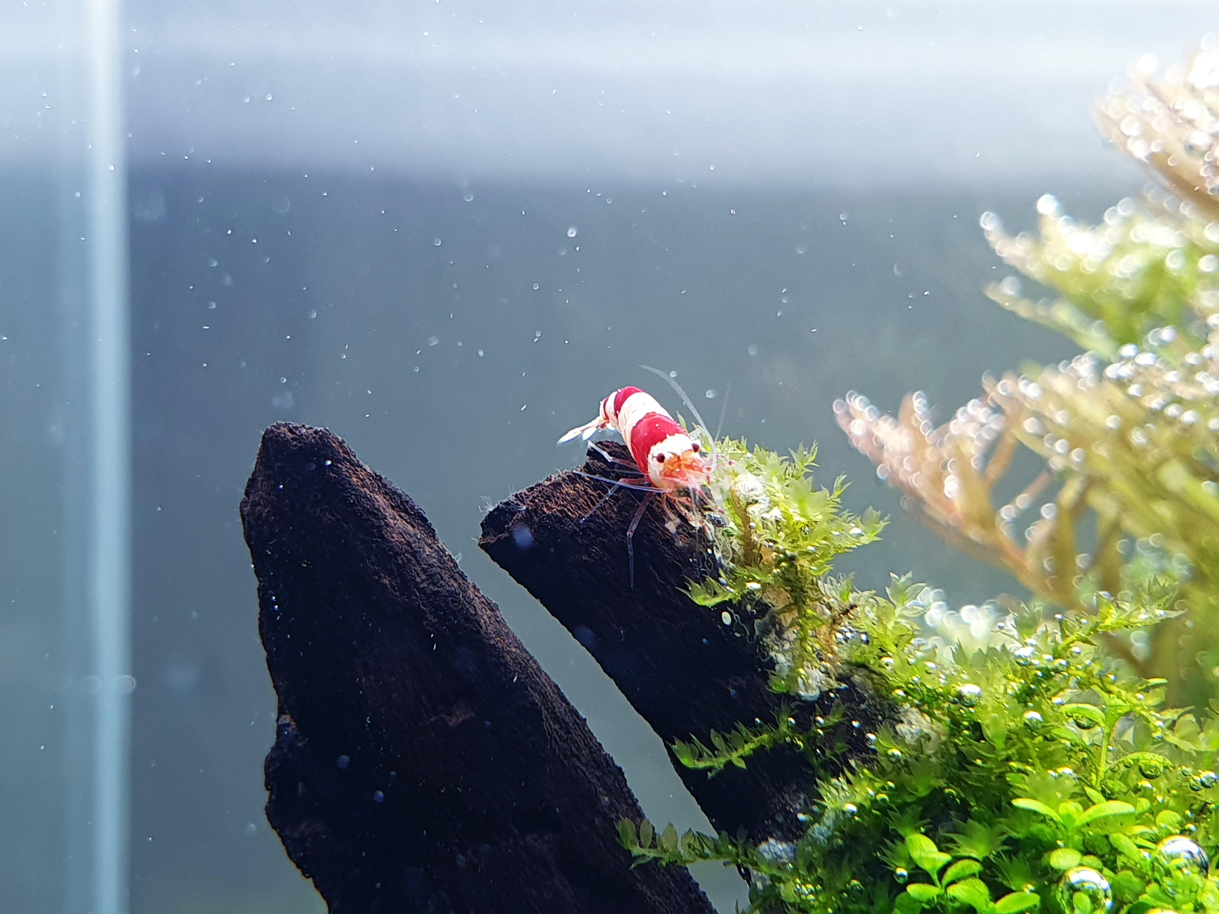 2020-07-15 - Shrimp 08.jpg