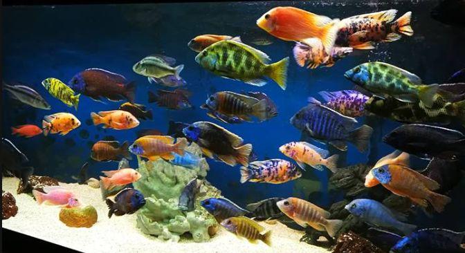 37-fish-aquarium-1-1.jpg