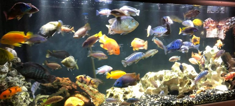 39-fish-aquarium-1-1-768x346.jpg