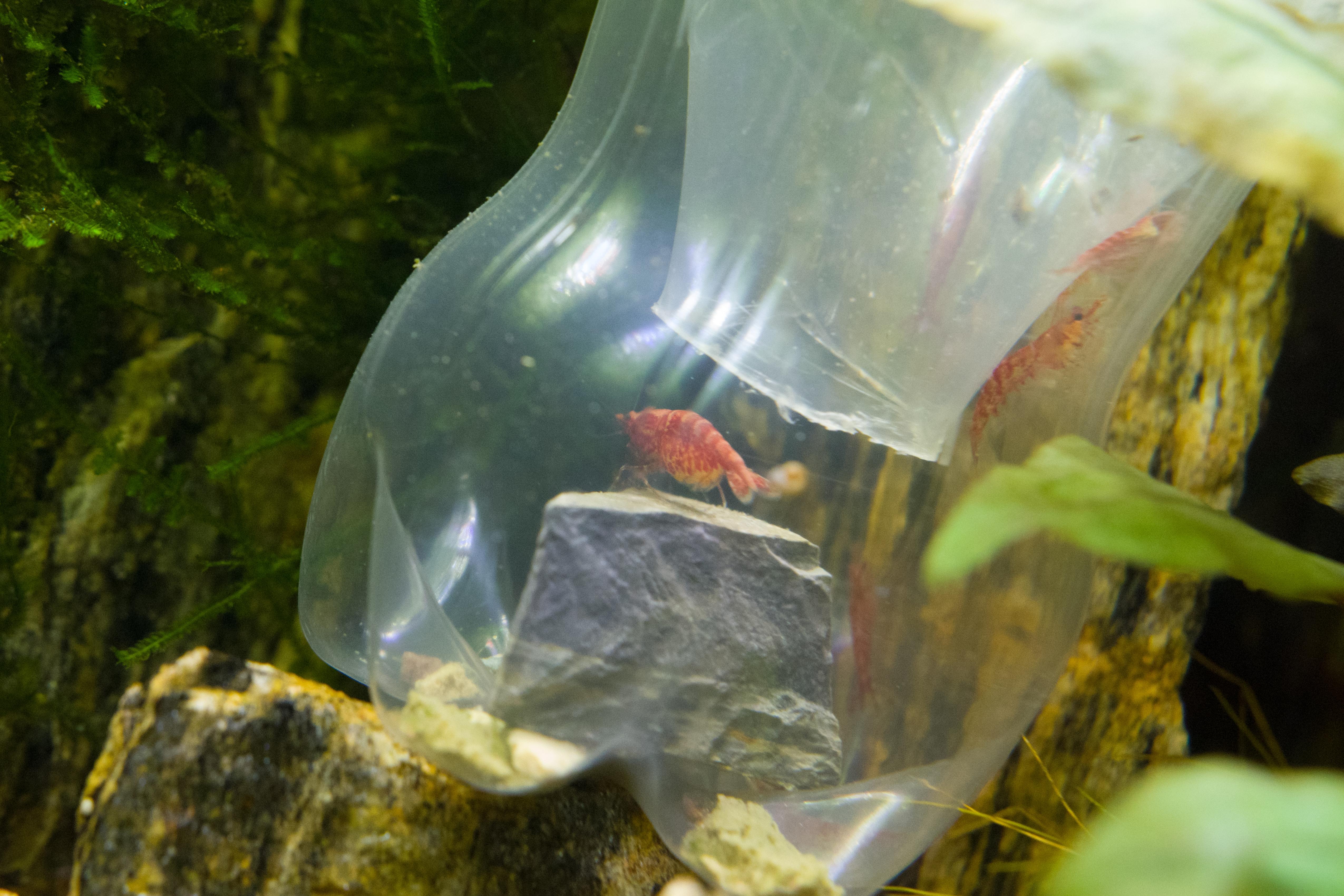 7243 - 13-December Shrimp Trap_small.jpg