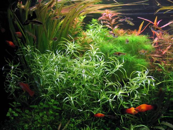 aquariumlinks2.jpg