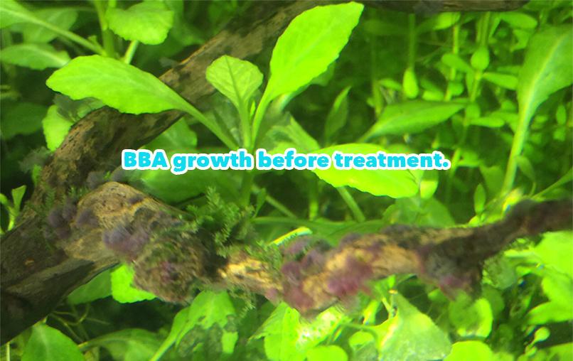 BBA%20algae%20treatment%20-02_zpsrzdxquzk.jpg
