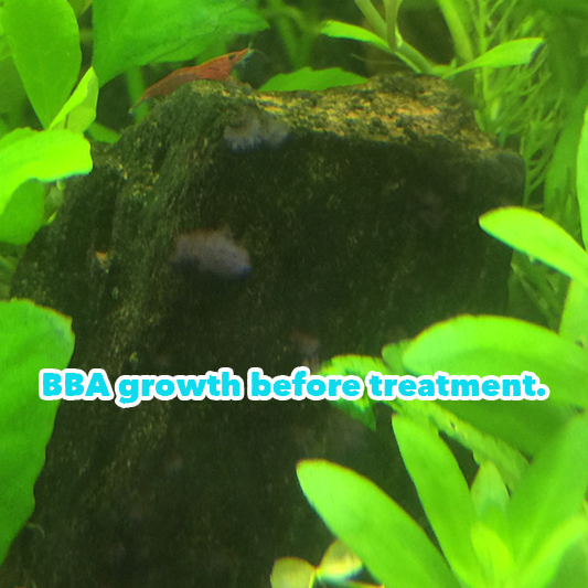 BBA%20algae%20treatment%20-03_zpsemdimyup.jpg