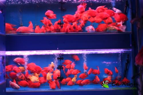 Ca-Xinh-tham-quan-va-lay-hang-tai-Quang-Chau-Trung-Quoc-thang-12-nam-2012-37.jpg