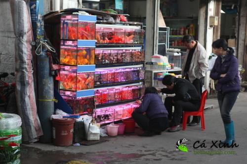 Ca-Xinh-tham-quan-va-lay-hang-tai-Quang-Chau-Trung-Quoc-thang-12-nam-2012-53.jpg