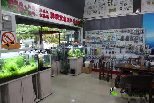 Ca-Xinh-tham-quan-va-lay-hang-tai-Quang-Chau-Trung-Quoc-thang-12-nam-2012-63.jpg