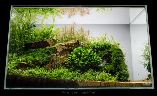 Escarpment-Nature-Aquarium-James-Findley-0101.jpg