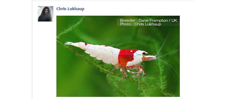 facebookscreengrab.jpg