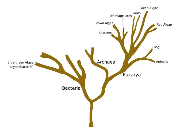 fig2-4-phylotreealgae-png.png