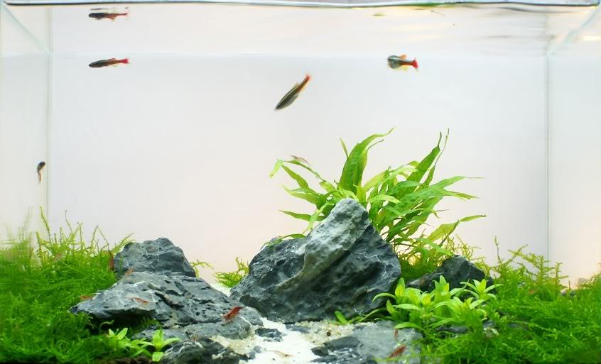 KopiaavMountainstream341.jpg
