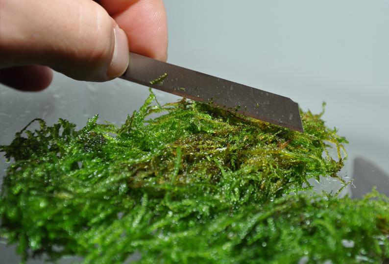 Moss cut.jpg