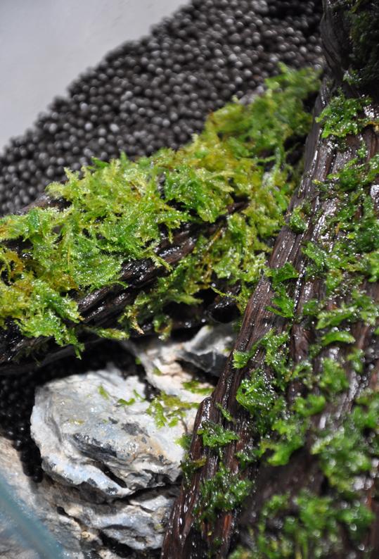 Moss on wood.jpg