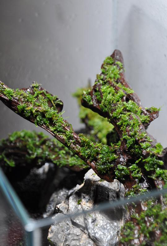 Moss on wood2.jpg