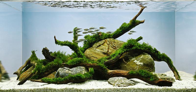 moss scape 6D sample.jpg