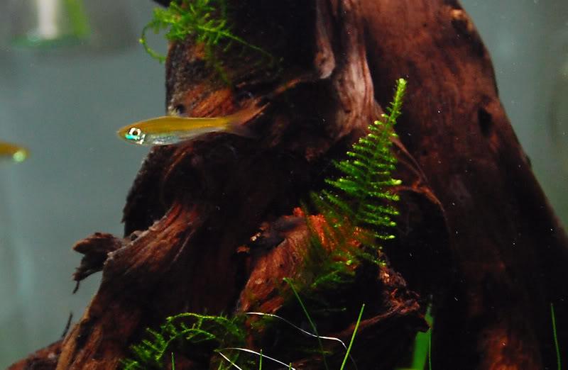 Moss010ps.jpg