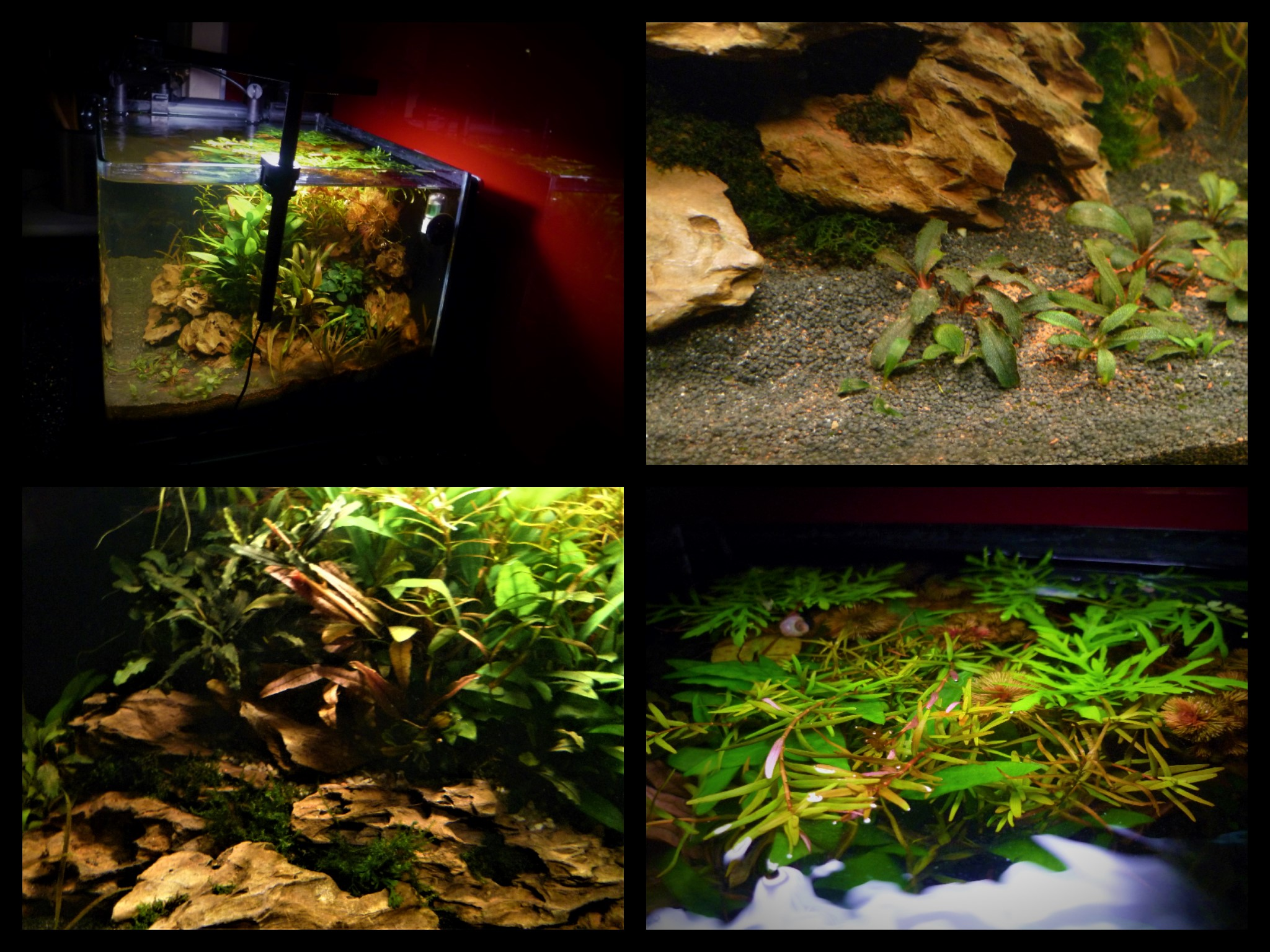 Scapers Tank Collage 2 ..jpg
