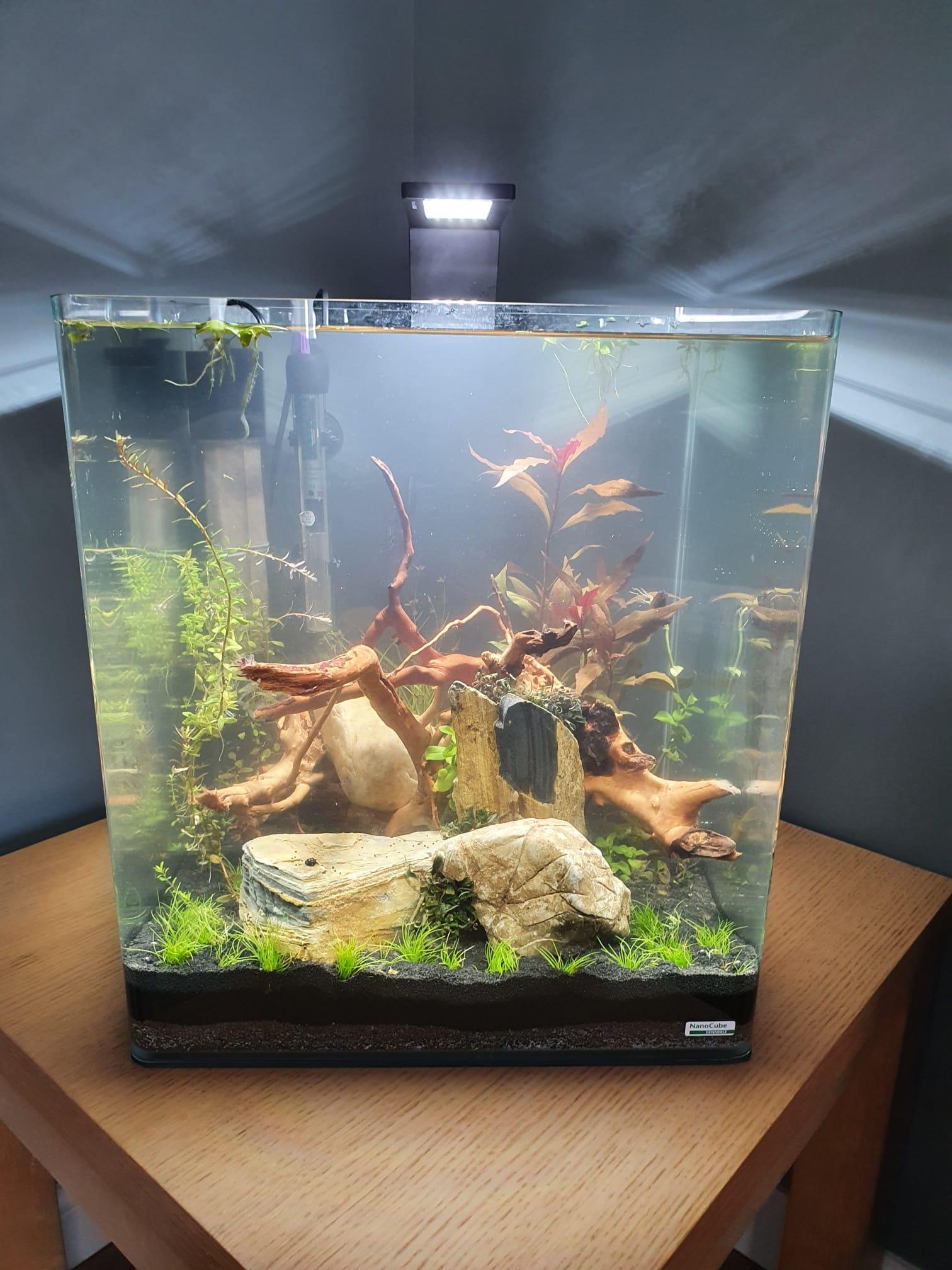 Shrimp Tank 180921.jpeg