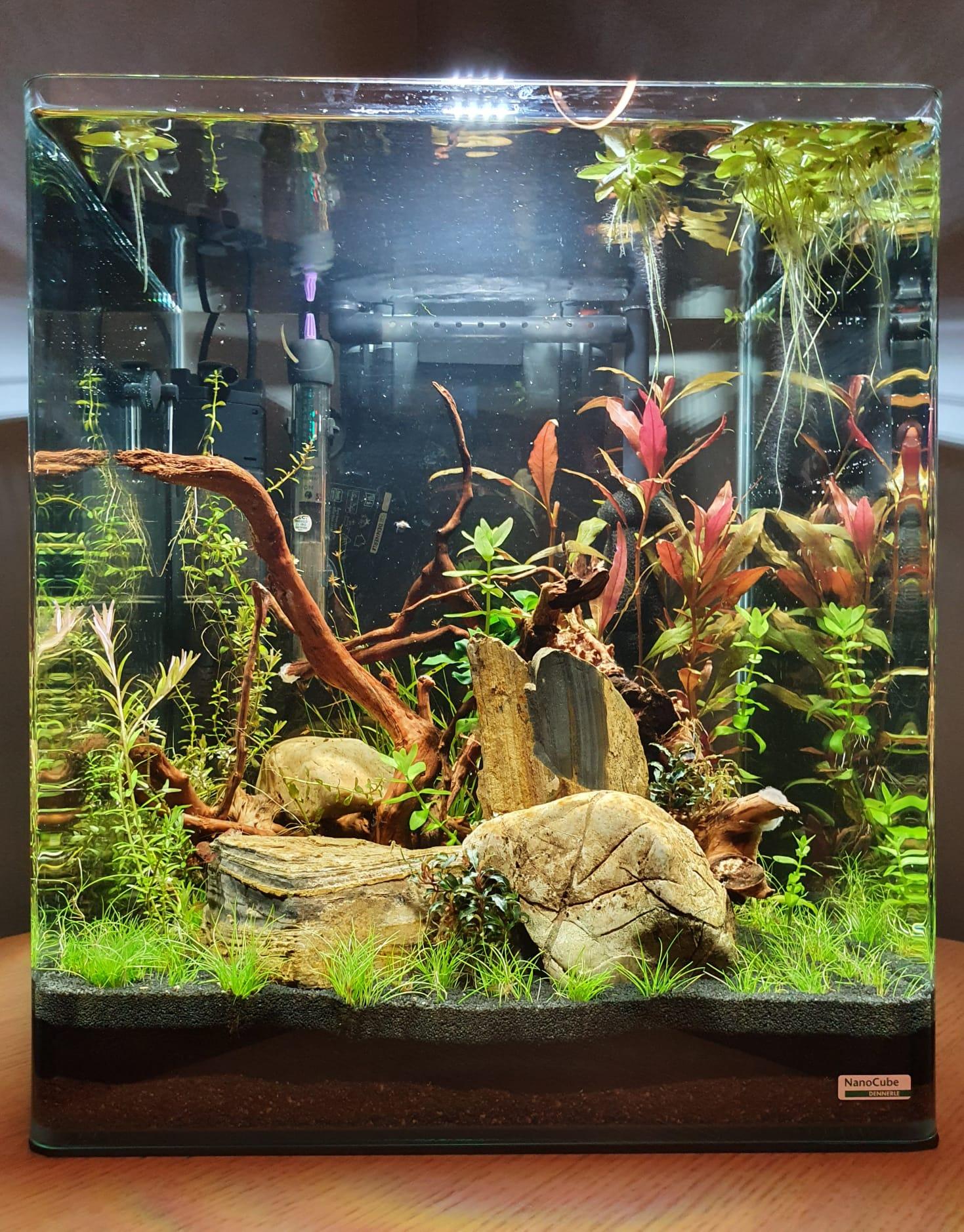 Shrip Tank 111021.jpeg