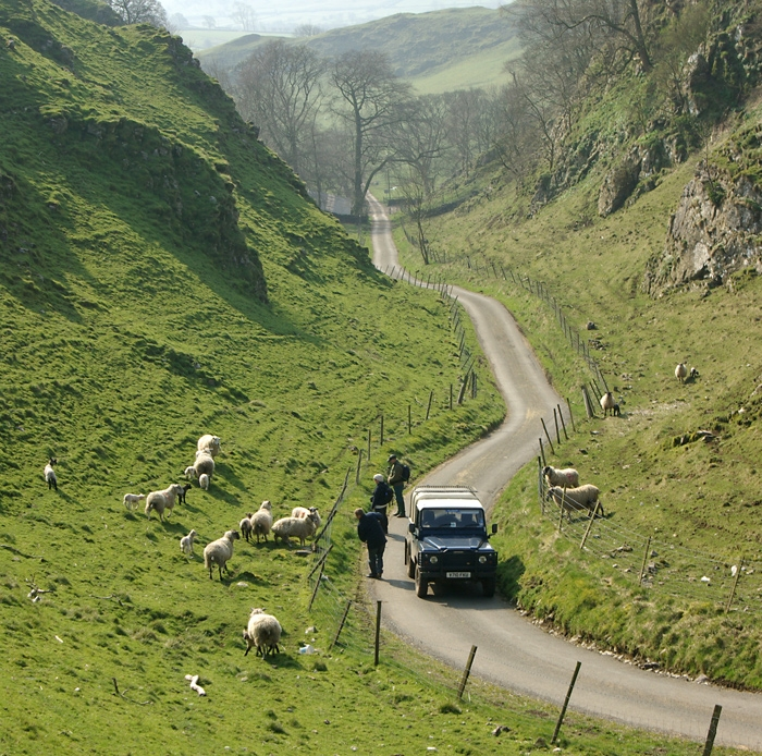 spring-lambs-longnor.jpg
