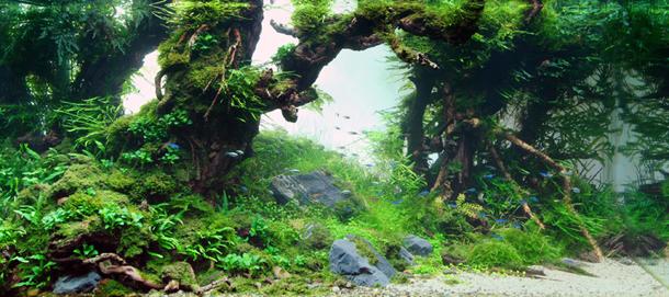 TakashiAmano (1).jpg