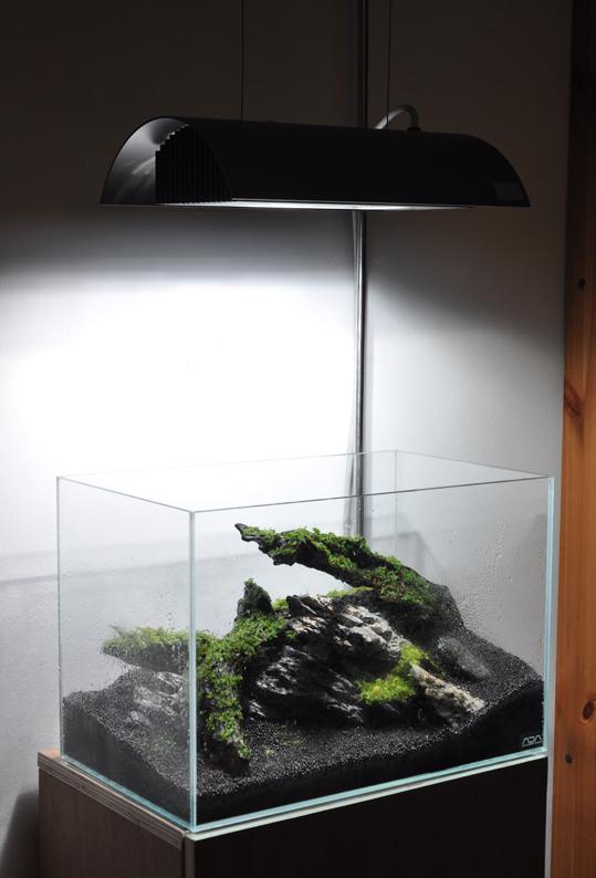 tank moss.jpg