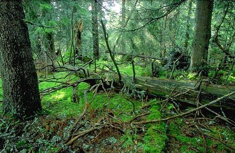 urskogstor.jpg