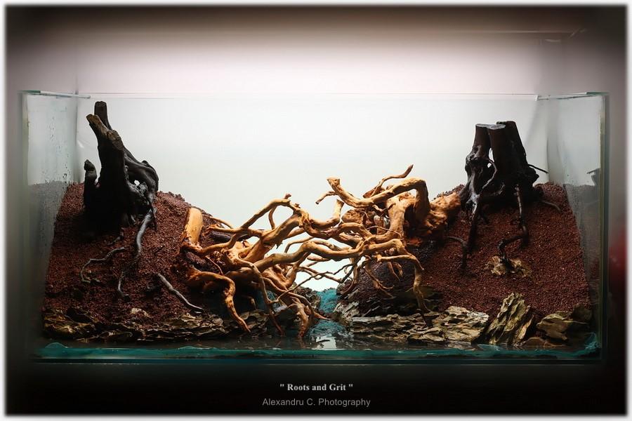 watermarked-rootsandgrit_day1_6_900_rszt1611fe368.jpg