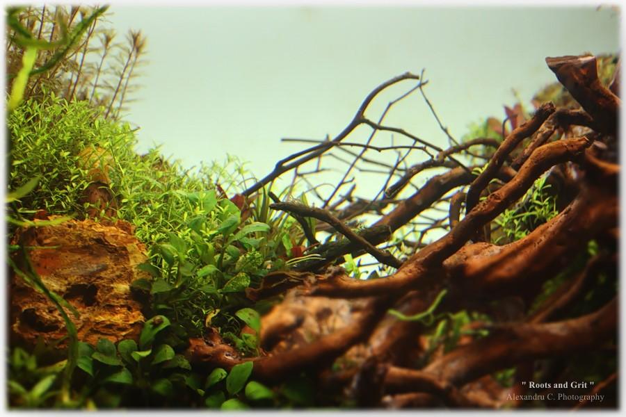 watermarked-rootsandgrit_day24_7_900_rszt1612d2dad.jpg