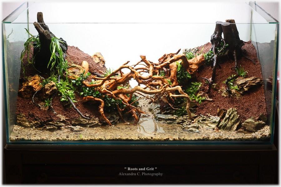 watermarked-rootsandgrit_day2_18_900_rszt16114485f.jpg