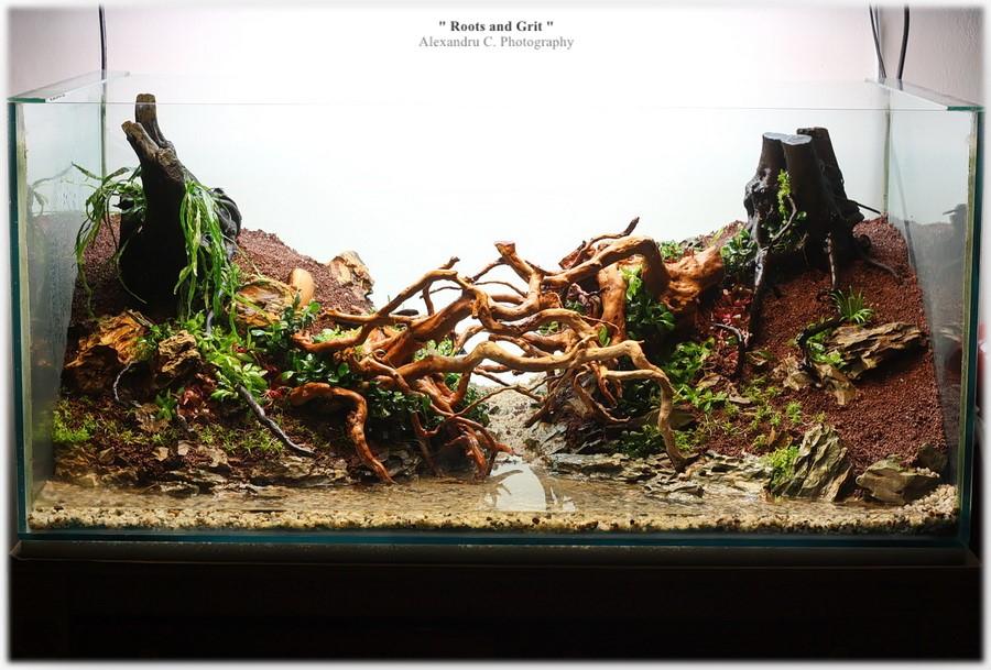 watermarked-rootsandgrit_day2_24_900_rszt1611807b4.jpg