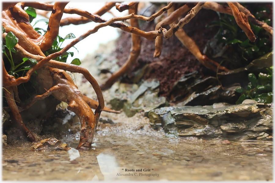 watermarked-rootsandgrit_day2_6_900_rszt1611d39bd.jpg